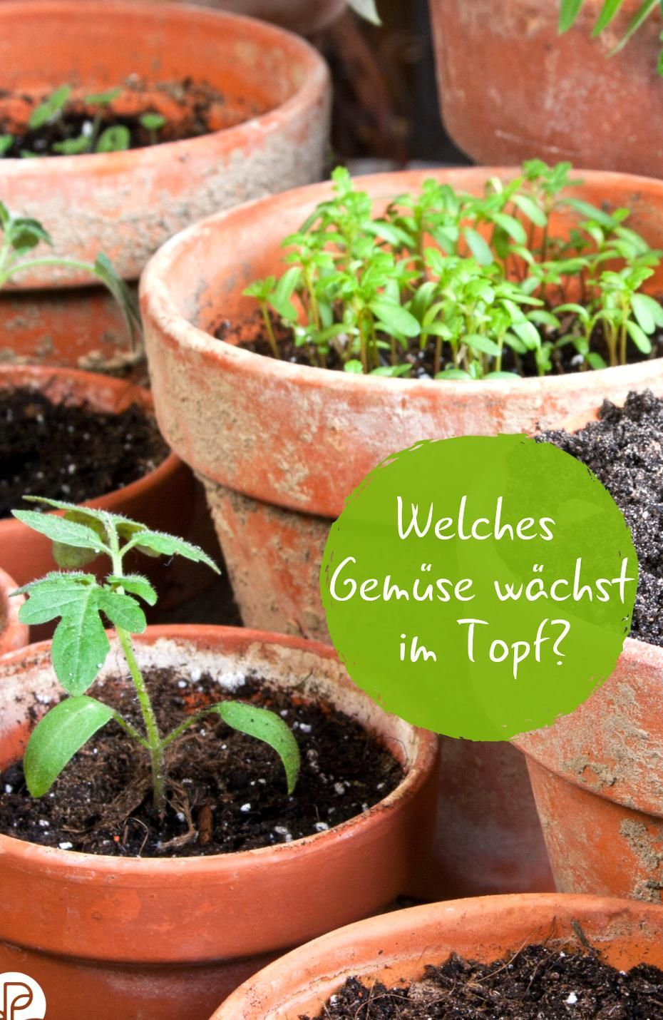 Welches Gemse Wchst Im Topf Gemse Anbauen Aber Kein Garten Kein Problem Wir Stellen Euch In 2020 Growing Vegetables Winter Vegetables Gardening Planting Vegetables