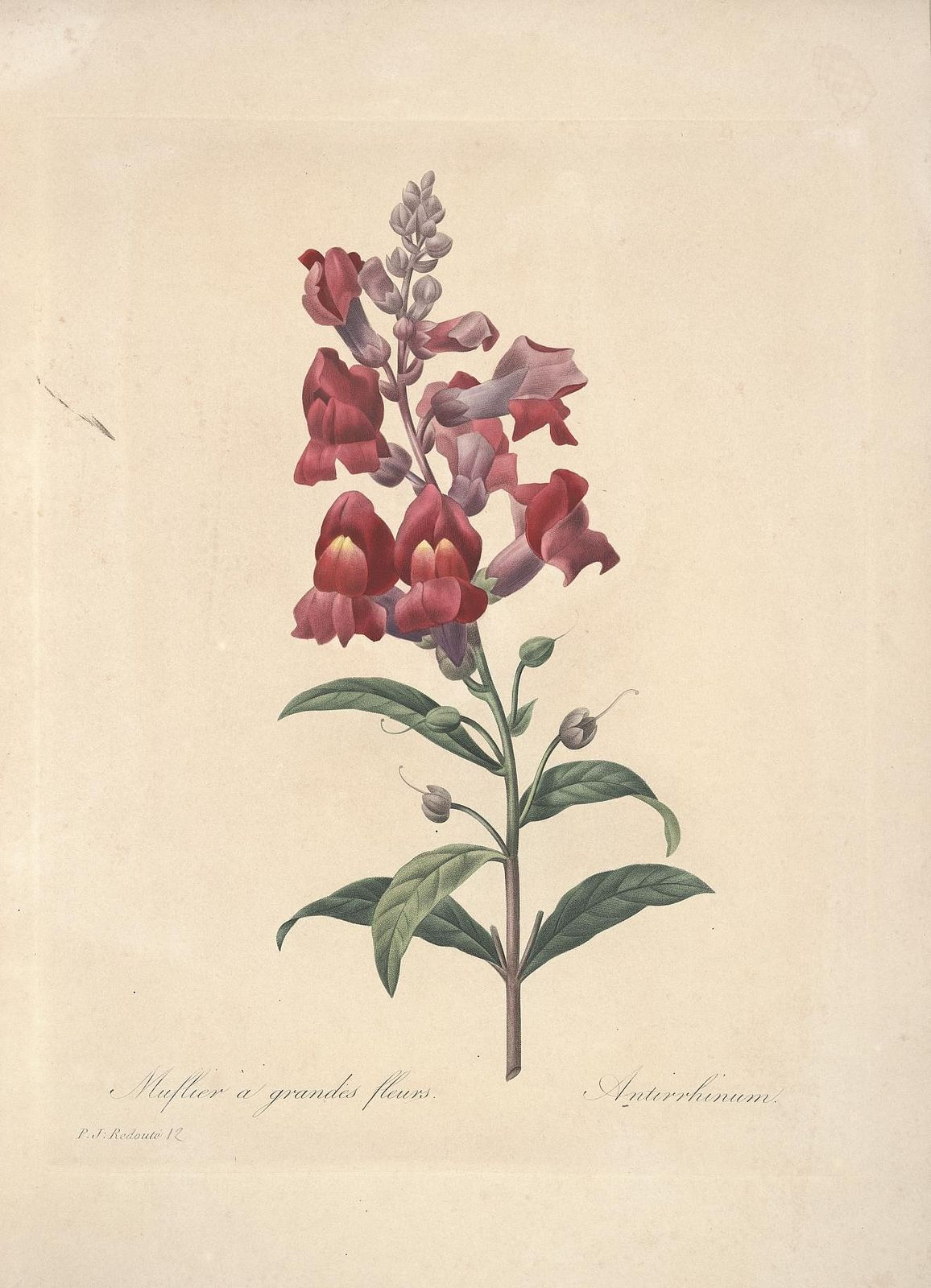 n36_w1150 Botanical art, Vintage botanical prints
