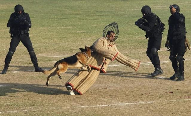A dog chases a mock intruder during a function to celebrate the 29th Raising Day of the Indian National Security Guard (NSG) in Manesar, about 60 km (38 miles) south of New Delhi, October 16, 2013. The NSG is a federal contingency force established in 1984 and a quick reaction elite force for neutralizing militants, hijackers and kidnappers in situations which are beyond the capability of local forces to handle.