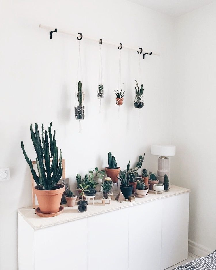 classy pictures of cactus house plants. cactus  plants plant lady home inspiration house living space room scandinavian nordic inviting style comfy minimalist minimalism minimal how cute are these