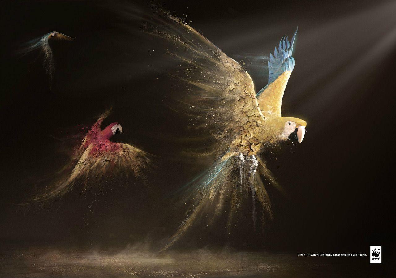 WWF Desertification: Parrots
