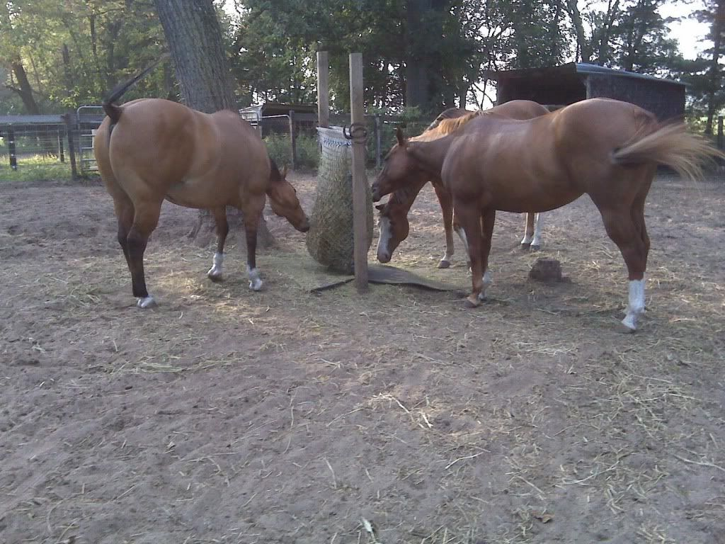slow horse wooden feeder feeders pin the at that hay pallet are easy