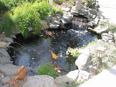 Koi pond waterfall garden ponds backyard pond pond for Garden duck pond design