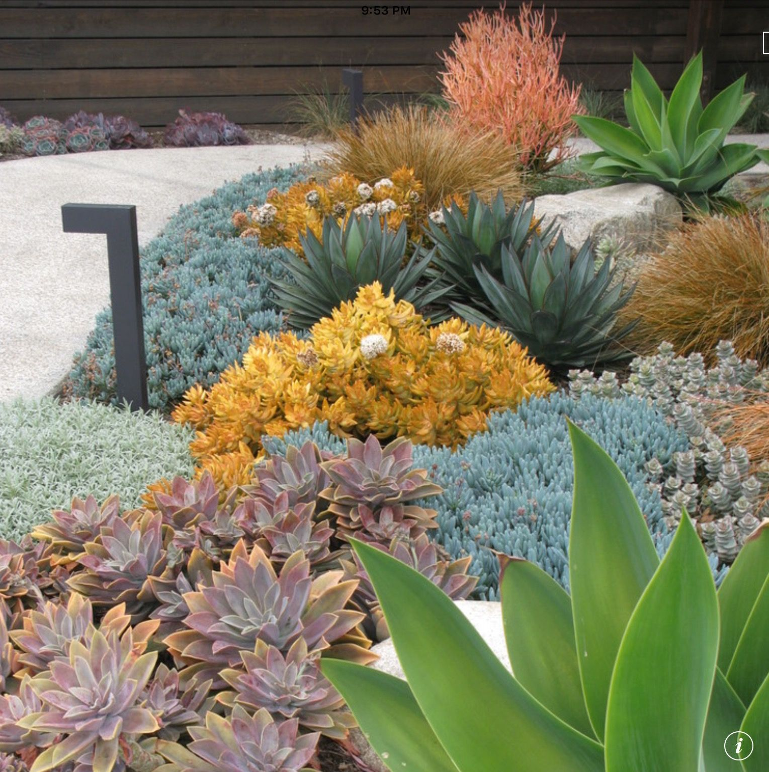 Seaside Succulent Garden (With Images)