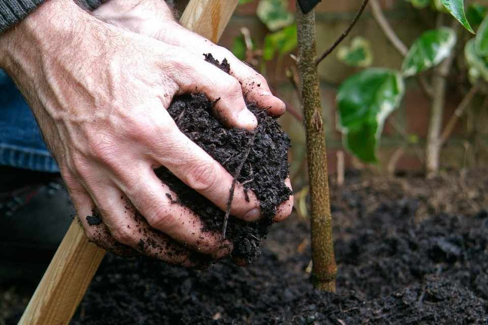 6c21de6730b0ad12e75986716b9b639d - How To Be A Gardener Bbc