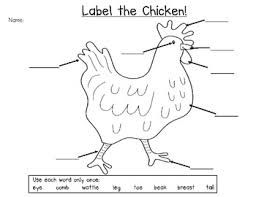Free Worksheets Life Cycle Of A Chicken Google Search Chicken