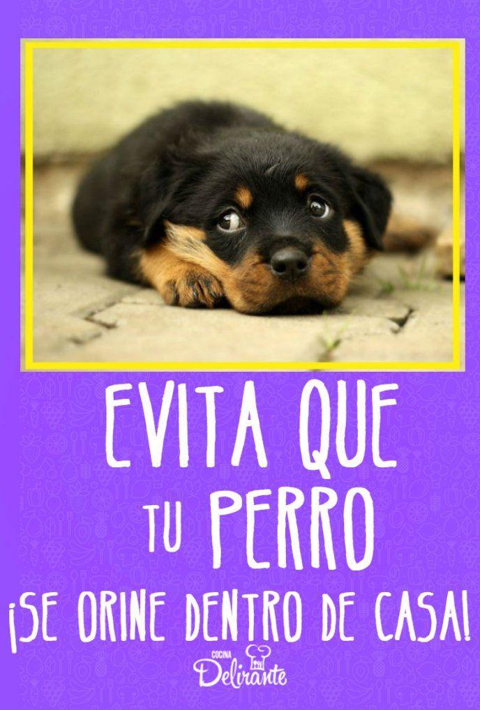 28 Ideas De Remedios Caseros Para Mascotas Mascotas Pulgas Y Garrapatas Cosas Para Perros