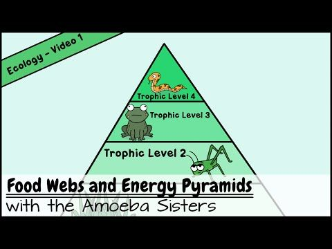Food Webs And Energy Pyramids Bedrocks Of Biodiversity Energy Pyramid Food Web Science Teaching Resources