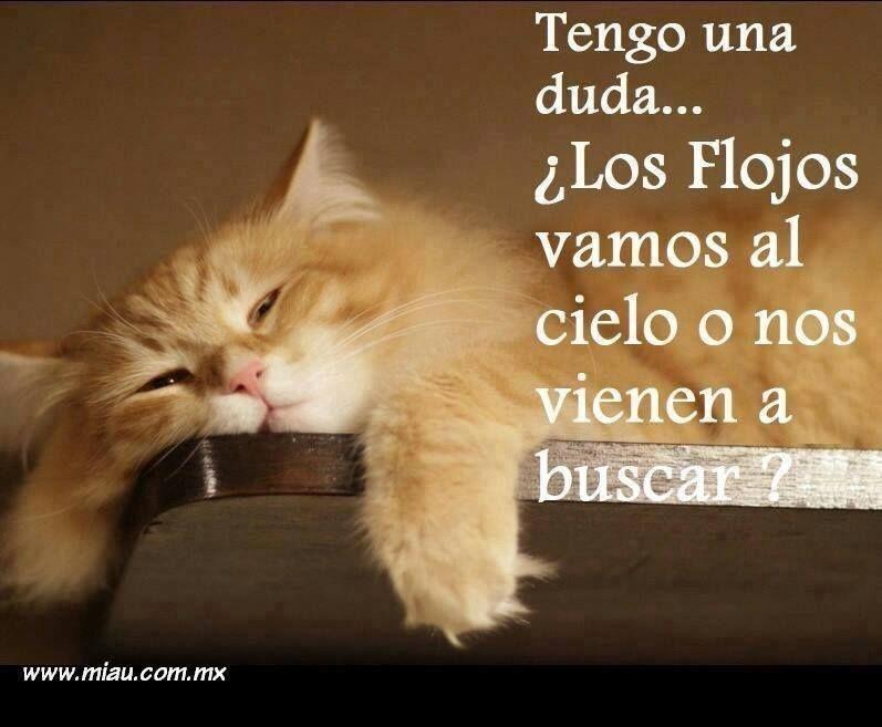 Flojos Chiste De Gatos Memes Espanol Graciosos Gatitos Divertidos