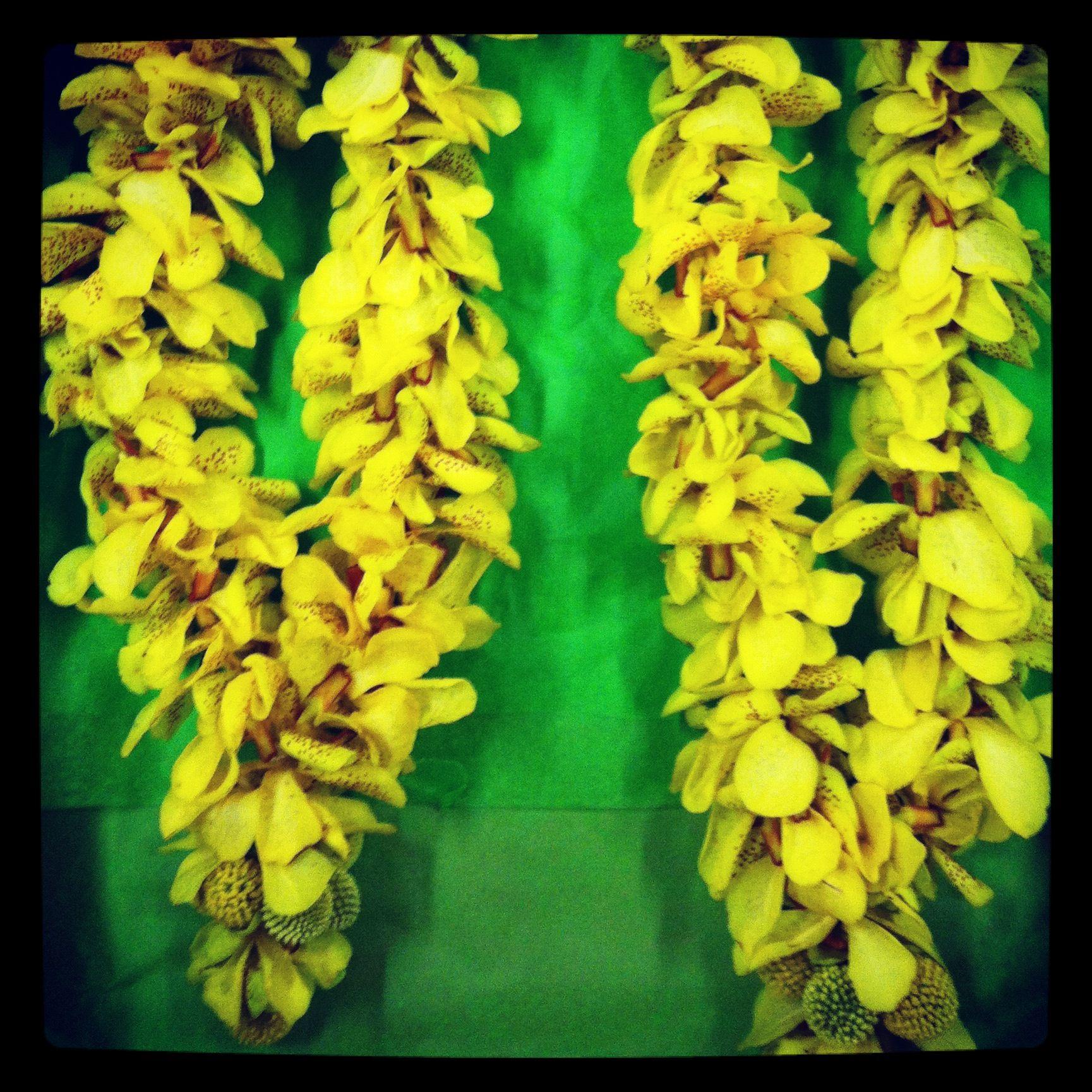 Traditional Wedding Hindu Garlands Cost 65 55inches In Length Yellow Mokara Orchid Buy It At Www Noveltylei Garland Wedding Wedding Decorations Hindu Wedding