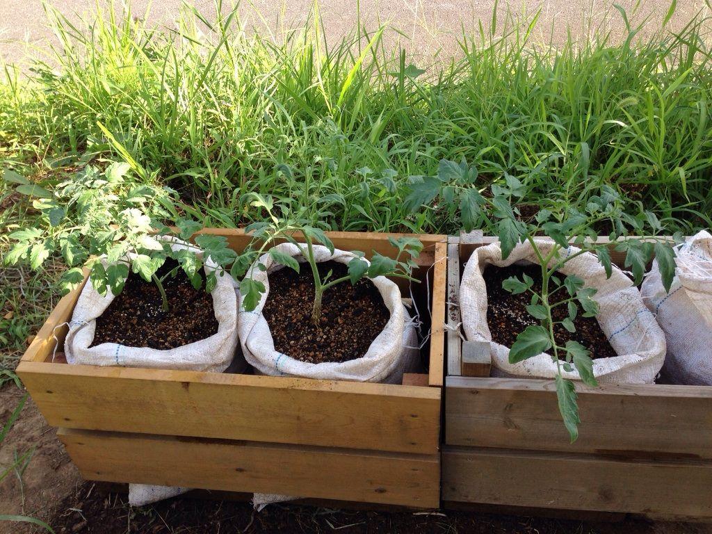 ベルですさんの栽培ノート一覧 家庭 ベランダ菜園を楽しむサイト