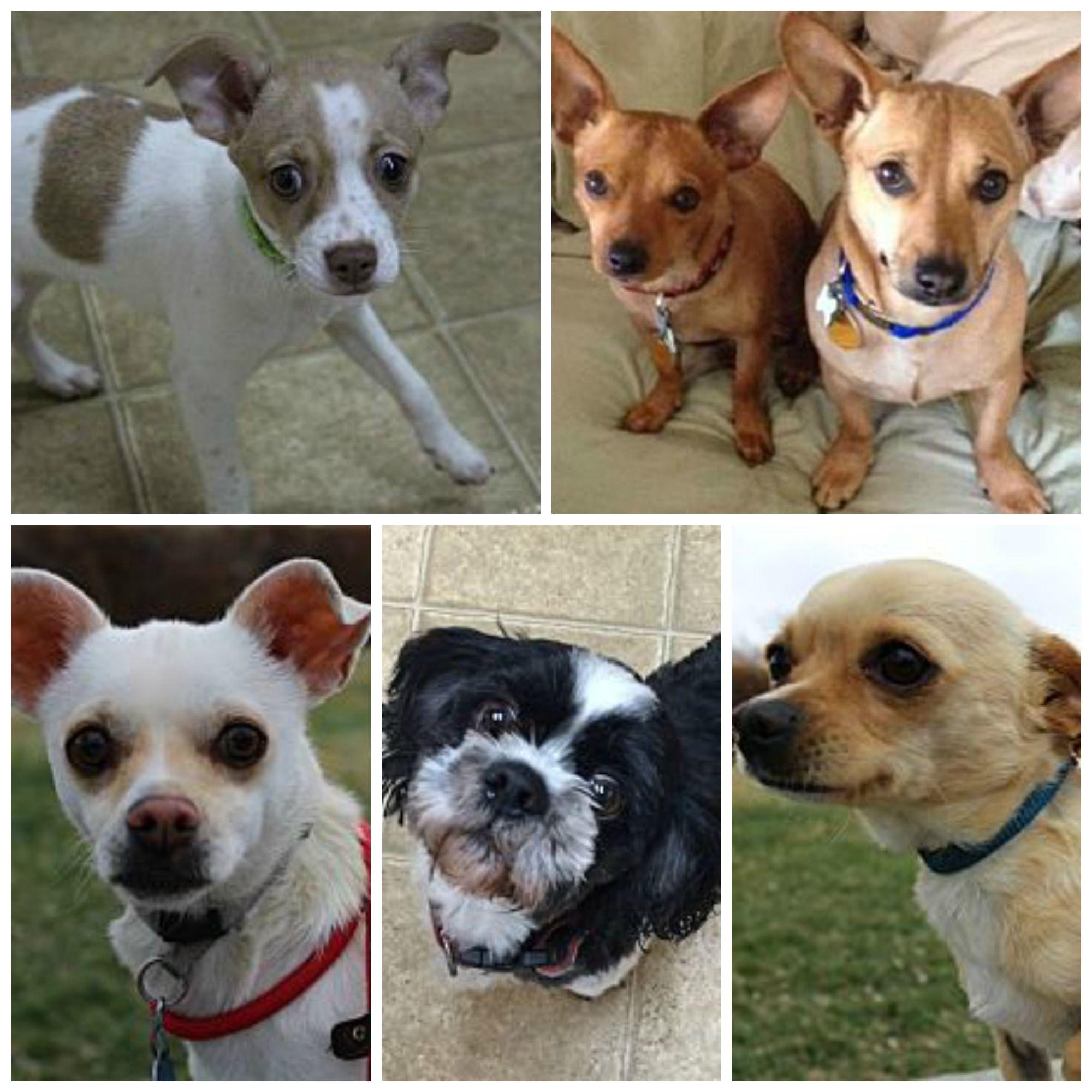 So many wonderful adoptions last week! 14 furkids found