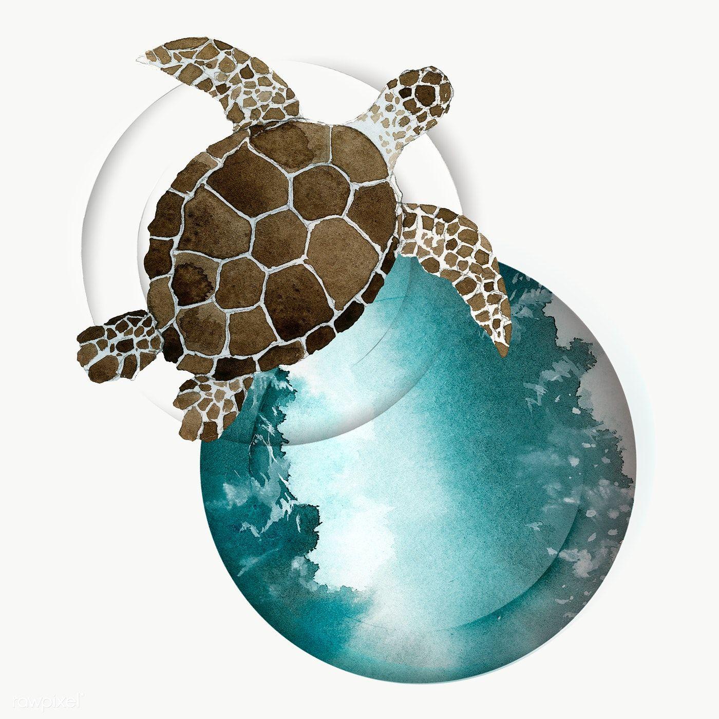 Watercolor Painted Sea Turtle Transparent Png Premium Image By Rawpixel Com Niwat Turtle Watercolor Sea Turtle Watercolor Fish Drawings