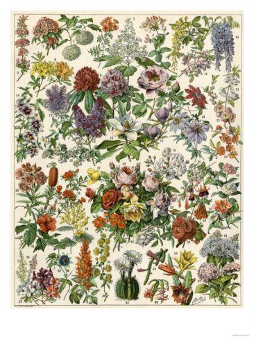 Flowering Shrubs, Including Peony, Rose, Lilac, Echinopsis, Fuschia, Laurel, Magnolia, Rhododendron