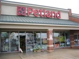 Petland Buy Puppies Puppy Mills Pet Care