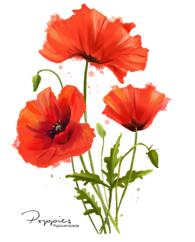 My Flowers Poppies Watercolor Painting By Kajenna Poppy Flower Painting Poppy Painting Watercolor Flowers