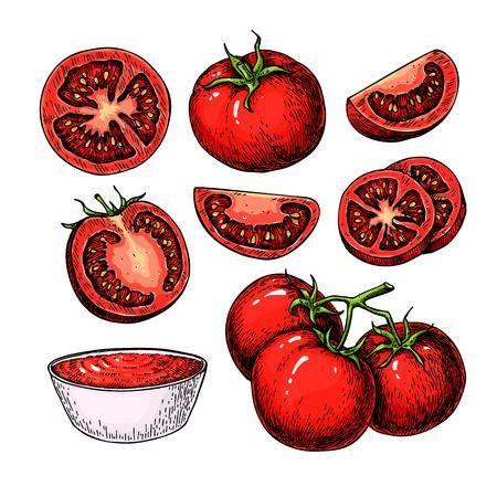 Tomate De Dibujo Vectorial Conjunto Aislado De Tomate Pieza En Rodajas Y Salsa De Tomate Vegetal Salsa De Tomate Tomates Dibujo Dibujo Vectorial