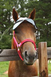 Horse Sun Visor!  Shade the eyes with 90% UV protection