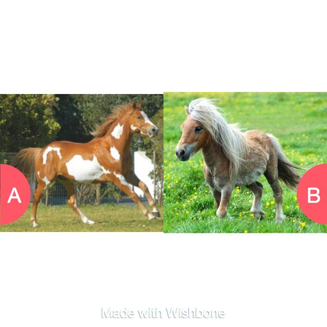 WYR have a horse or a pony as a pet?  Click here to vote @ http://getwishboneapp.com/share/32013911