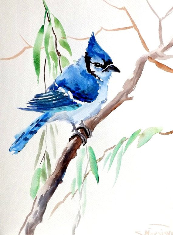 Blue Jay Original Watercolor Painting 12 X 9 In Watercolor