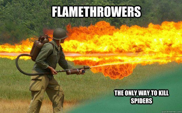 I Agree Wheniseeaspidermeme Way To Kill Spiders My