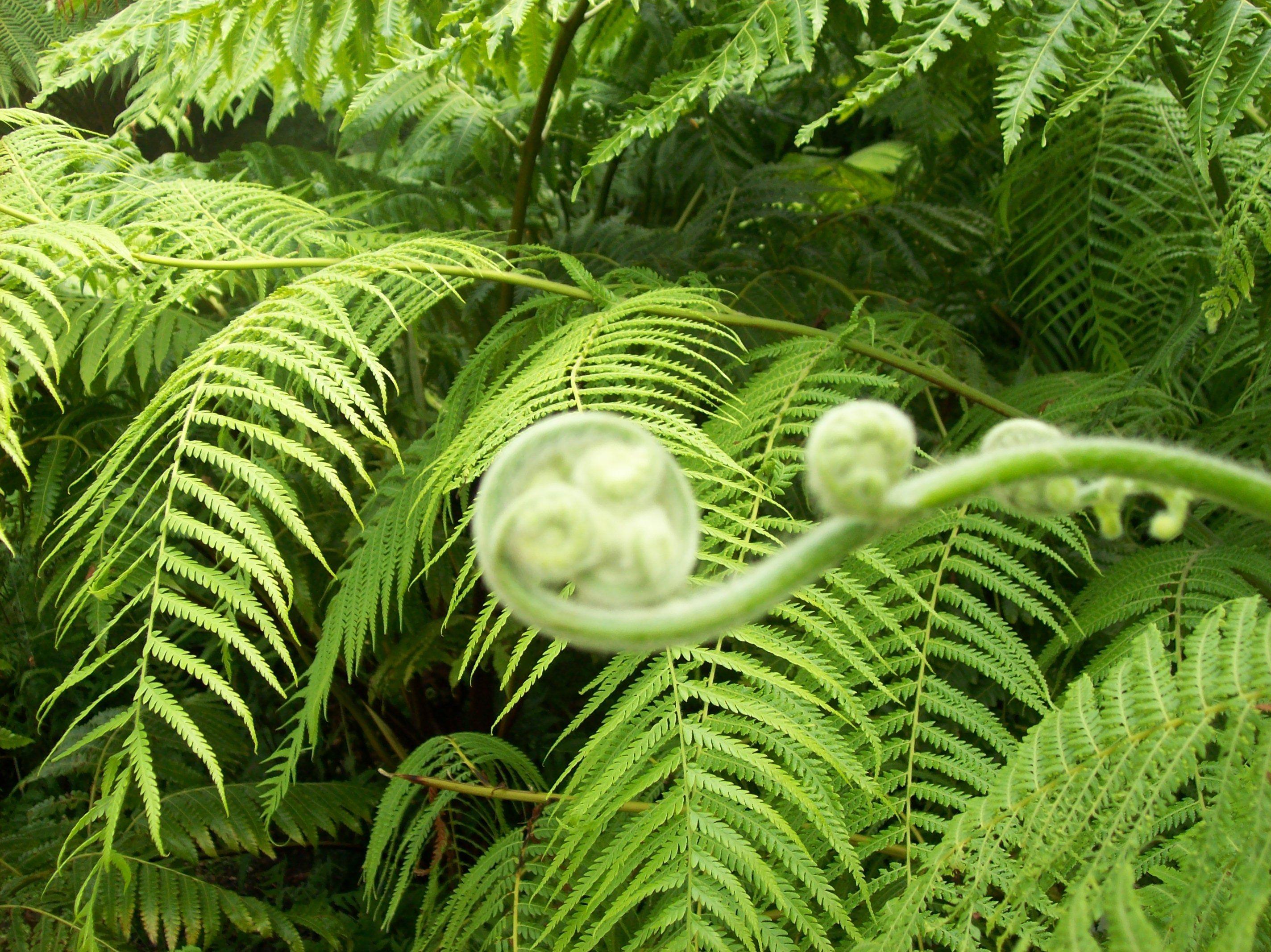 Glasgow Botanical Gardens | Botanical gardens, Plant ...
