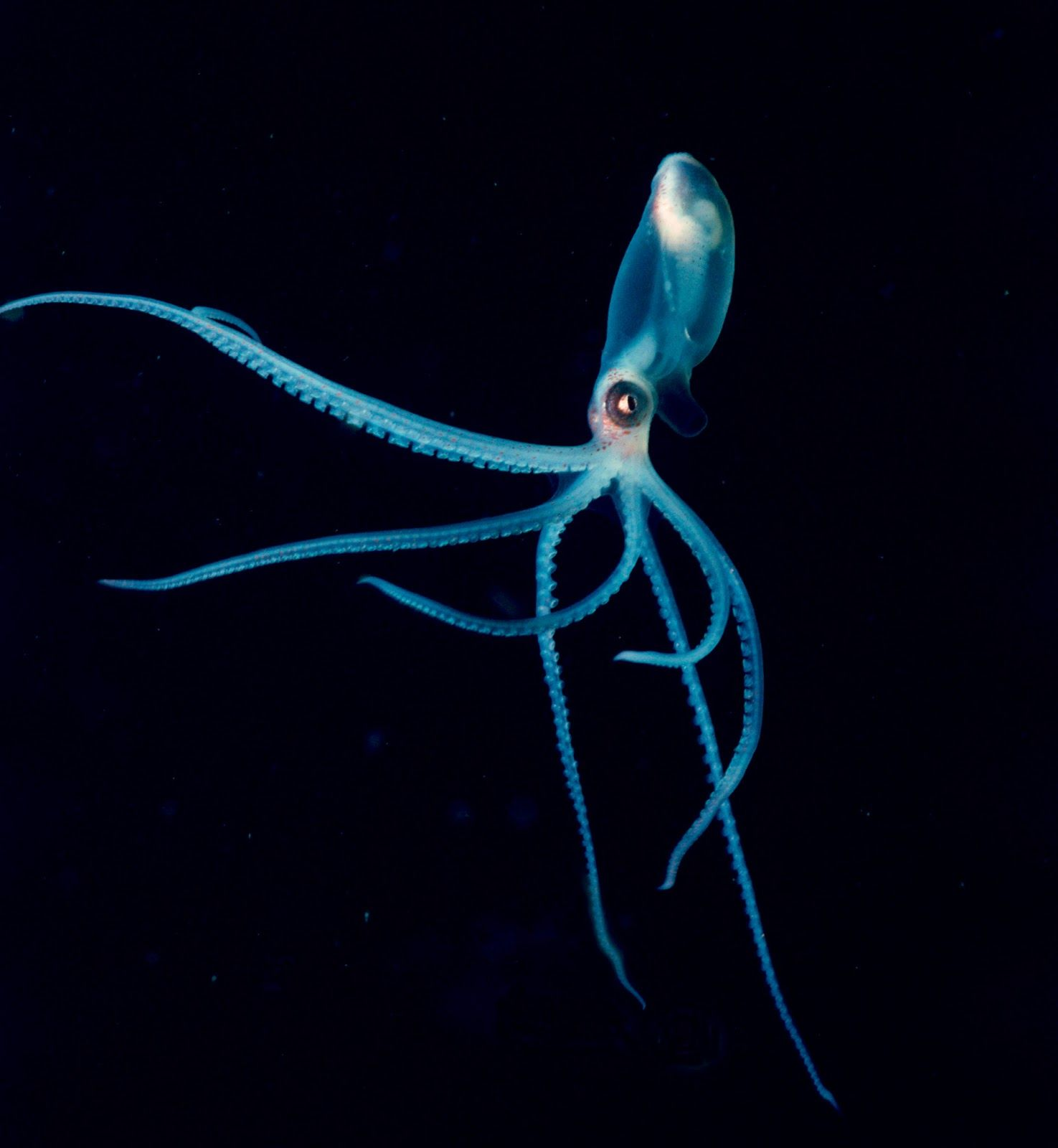 Explore Deep Blue Sea Octopuses And More