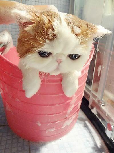 милая кошка