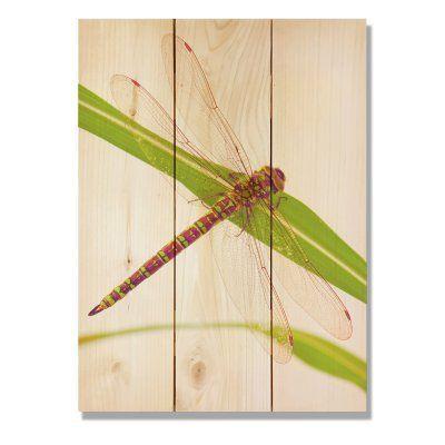 Gizaun Art Dragon Fly Indoor / Outdoor Wall Art - DF1624  sc 1 st  Pinterest & Gizaun Art Dragon Fly Indoor / Outdoor Wall Art - DF1624 | Outdoor ...