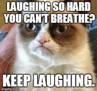 Memes #2 {continuing} - Grumpy cat