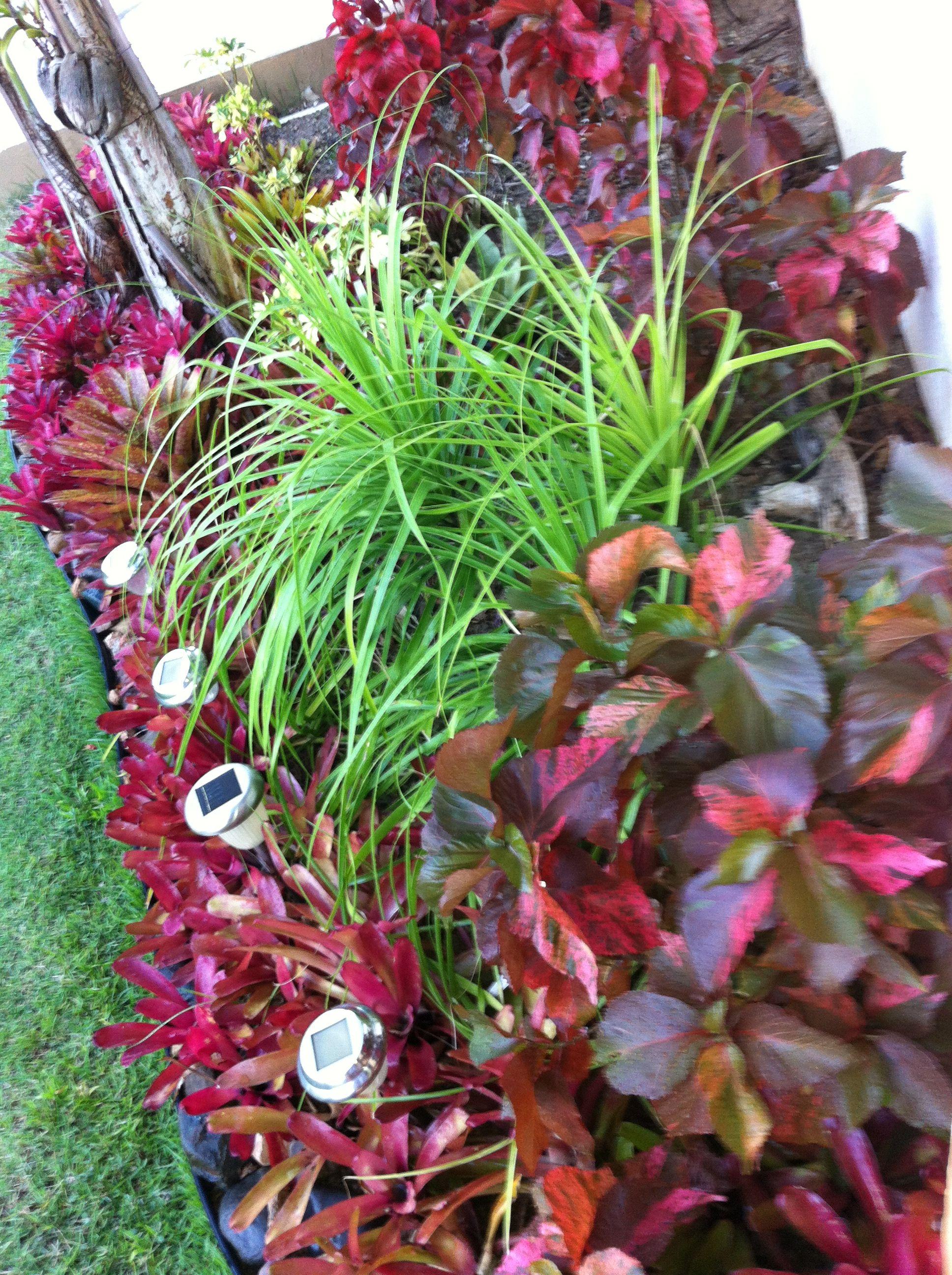 Mi jard n est compuesto por hermosas bromelias rojas for Jardines de poni