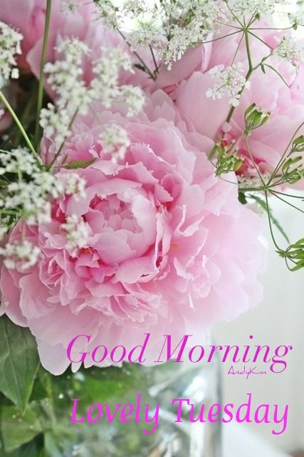 Pin by Brenda Bester on Good Morning | Good morning tuesday, Good morning images, Happy tuesday morning