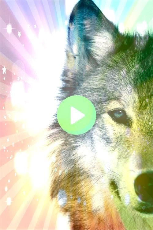 and beautiful and vital to the world mysterious and beautiful and vital to the worldmysterious and beautiful and vital to the world Cherokee Two Wolves Parable Wolves  Tu...