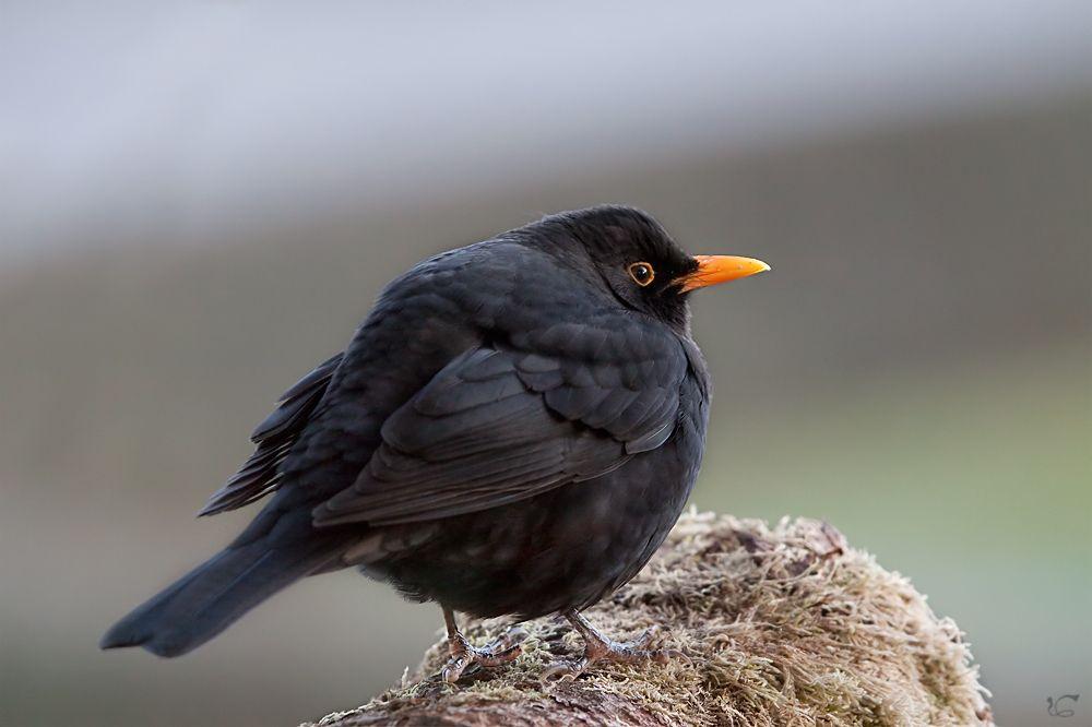 Birds Von Anna Bunte Vogel Tiere Vogel Im Garten