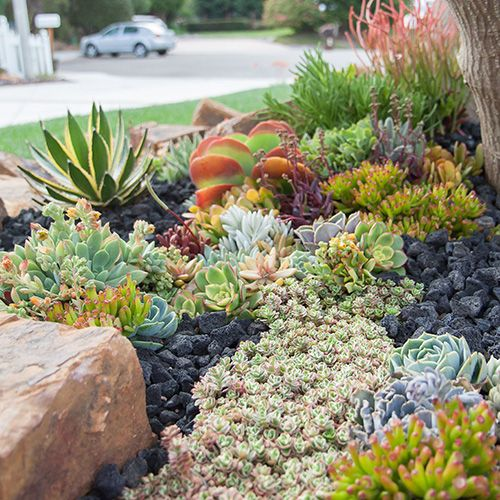 how to make a succulent garden bed