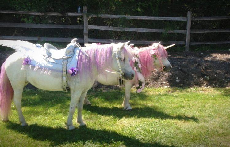 Rent Unicorn Ponies For Birthday Parties Simplemost Pony Rides Pony Ride Birthday Party Pony Party Theme