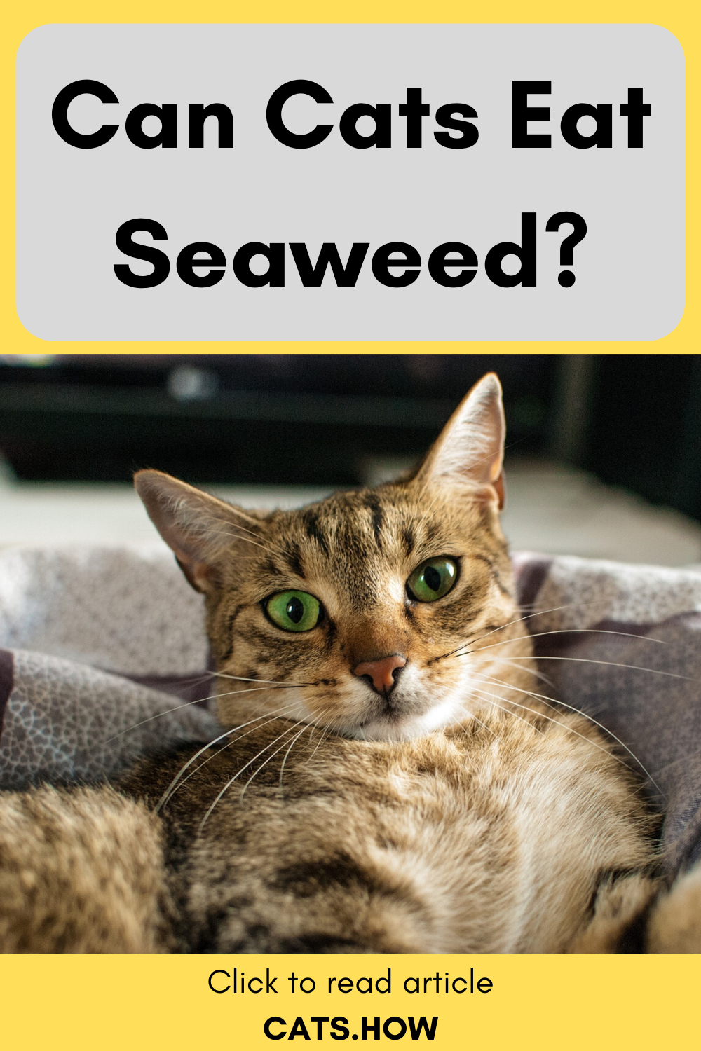 Can Cats Eat Seaweed In 2020 Cats Eat Cat Care Tips