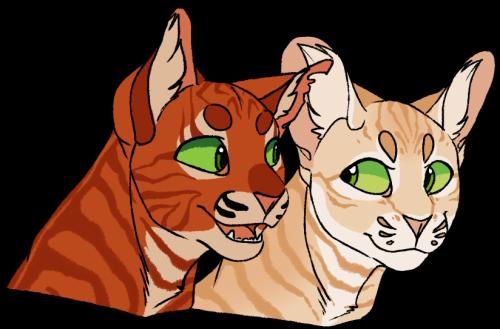 firestar and sandstorm Warrior cats, Warrior cats art