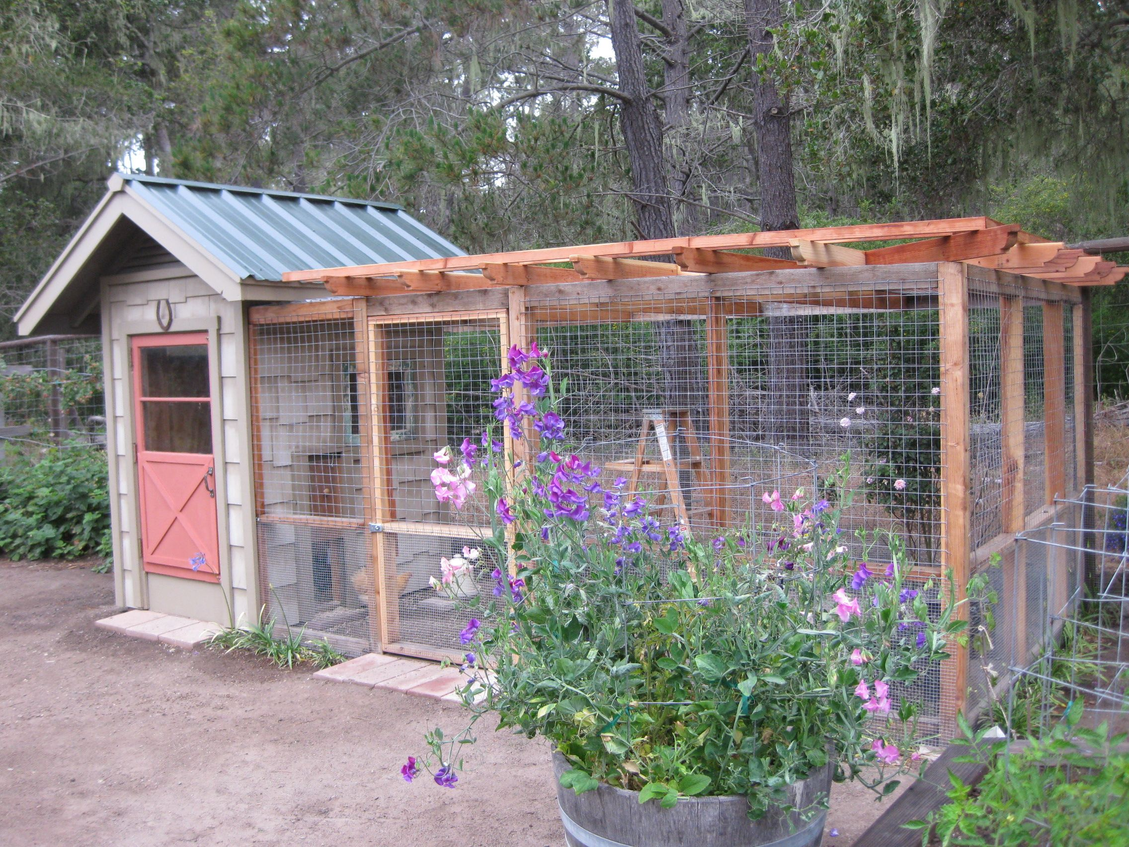 Awesome Purple Daisy Chicken Coop With Run I Wish I Had The - Chicken co op with flowers
