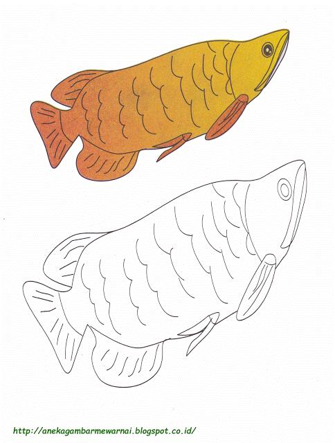 Aneka Gambar Mewarnai Gambar Mewarnai Ikan Arwarna Untuk Anak Paud