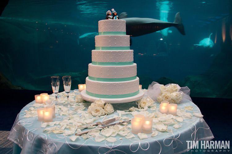 Wedding Ceremony Reception Georgia Aquarium This Is
