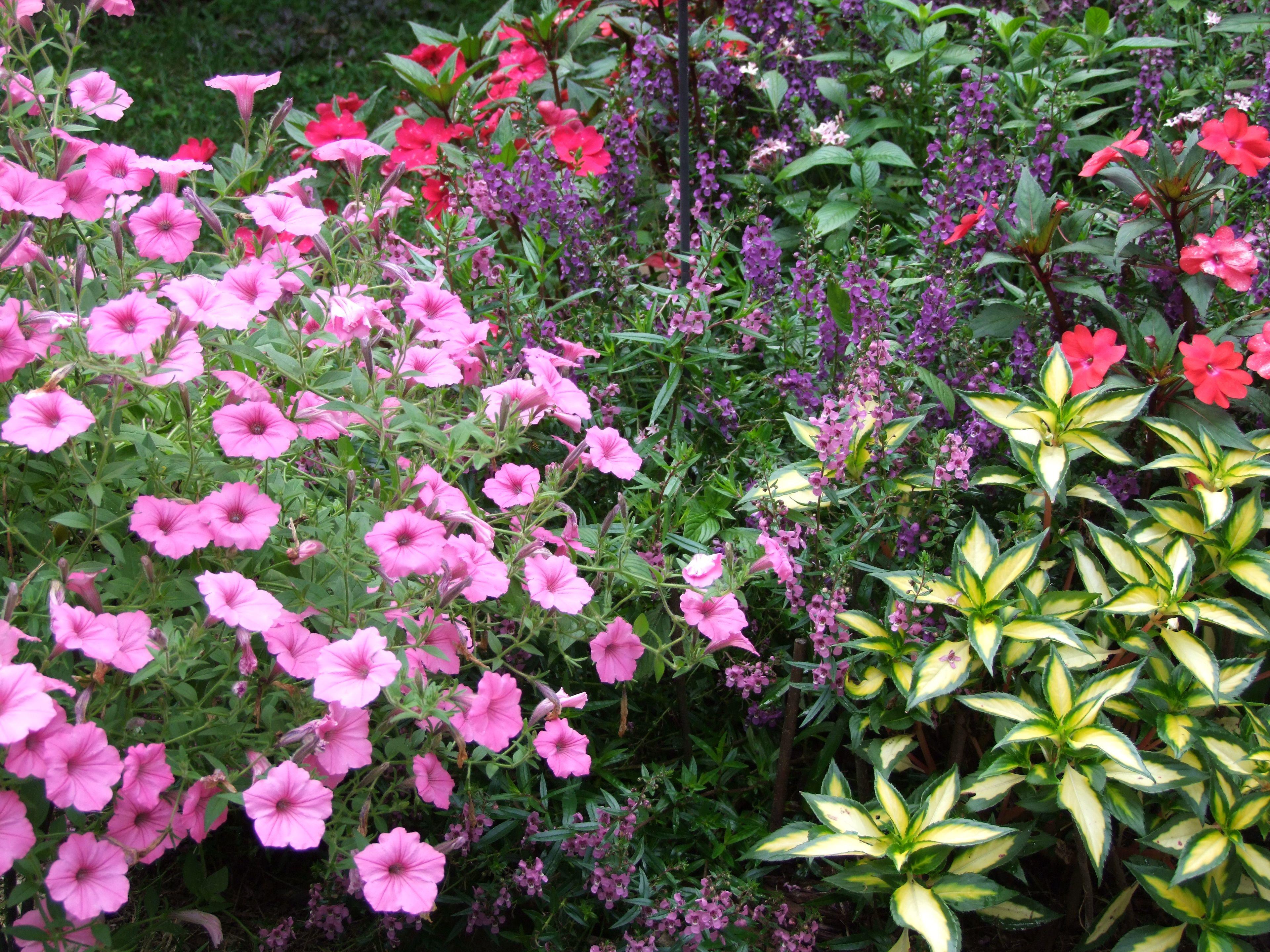 August Color August Colors Flowers Plants 640 x 480