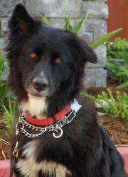 Adopt Sadee On Petfinder Losing A Dog Lose 50 Pounds Shepherd Mix Dog