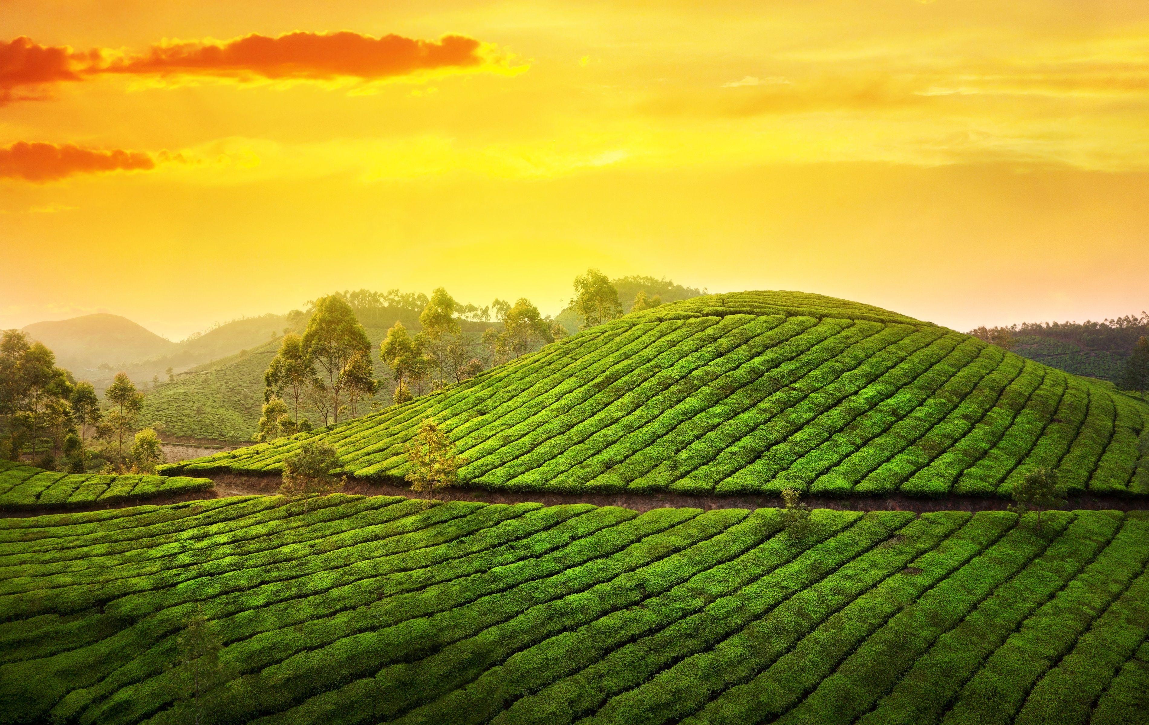 Download wallpaper munnar, kerala, india, munnar, kerala