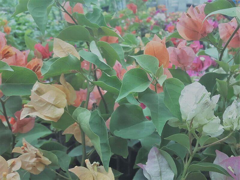 Pin By Tharindu On Polwatta Plant Nursery Plant Nursery Plants Organic Gardening Catalogue