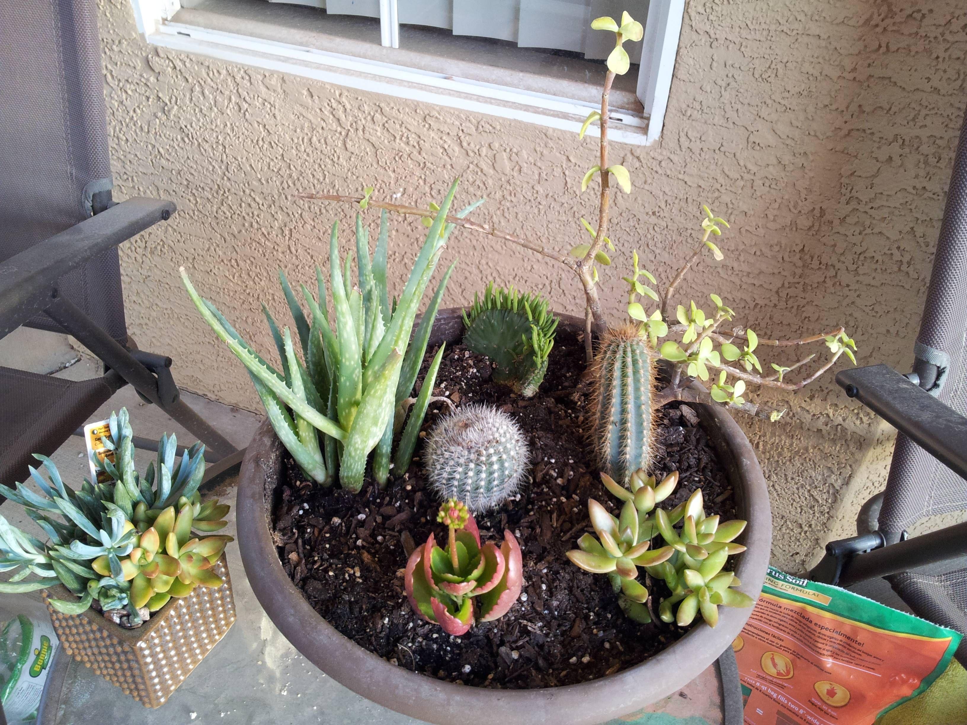 http://www.reddit.com/r/gardening/comments/1t4lzi/homemade_mini_succulent_garden/