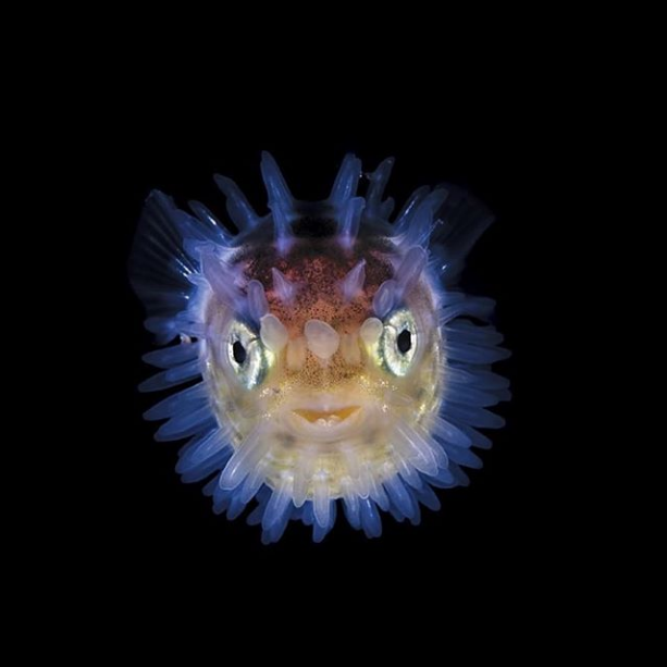 Do You Know Who I Am Fish Tank Accessories Aquarium Accessories Aquarium Shop