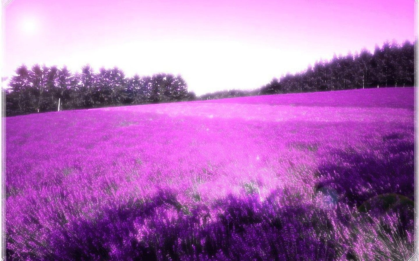 An-Endless-Field-of-Purple-Flowers | Life of flowers ...