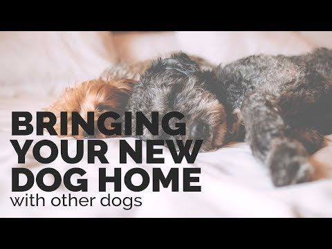 Introducing Your New Dog to Your Existing Dog - YouTube