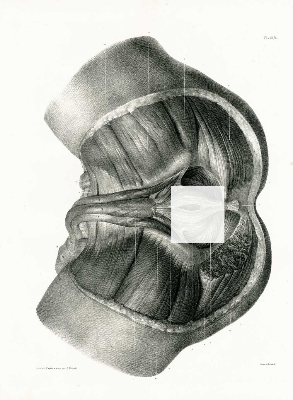 1831 Perineum Male Antique Anatomy Perineal Body Print, Human Body ...